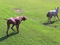 2010 - Dog Meets Wolf – Our dog Rasta, millions of views - video